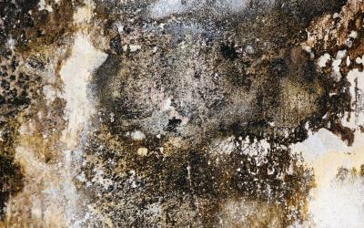 6 Key Facts About Mold